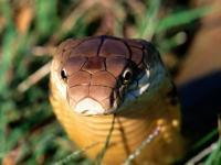 3 000 избягали змии изпразниха цял град